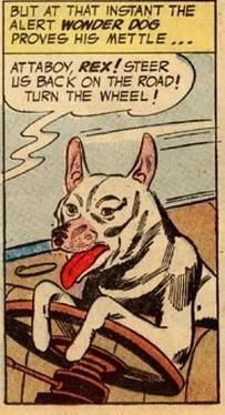 Rex the Wonder Dog Drives A Car